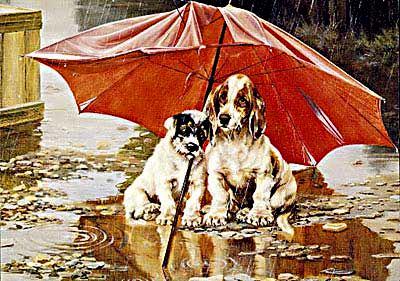 щенки под дождем